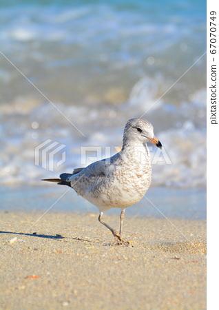 美丽的野生鸟,在热带的海滩 67070749
