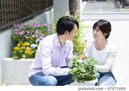 정원 꽃 화분 원예 67071669