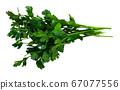 Fresh green parsley leaves 67077556