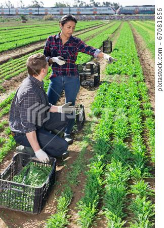 Latin american farm workwoman talking to coworker on field 67081856