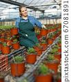 Woman inspecting oregano seedlings 67081891