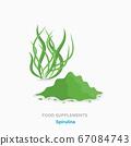 Vector flat isolated icon of food supplements - spirulina algae plant 67084743