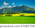 Spring rural landscape with grassy meadows. 67085708
