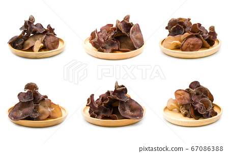 Group of black fungus set isolated on the white 67086388