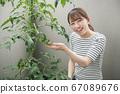 베란다에서 방울 토마토 재배를하는 일본인 여성 이미지 67089676