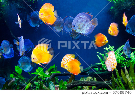 colorful of coral reef fish with tree and plant 67089740