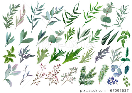 Huge set of watercolor leaves and branches, hand drawn  67092637