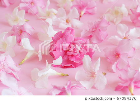 Pink flowers on light pink background 67094376