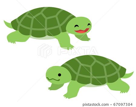 Turtle illustration 67097384