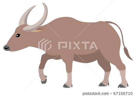 Buffalo isolated on white background 67100710