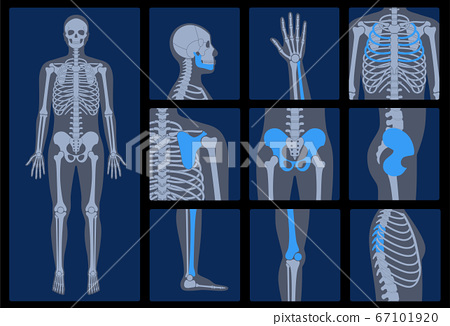 Skeleton x ray 67101920