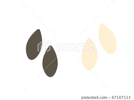 Illustration of sesame white and black sesame 67107113
