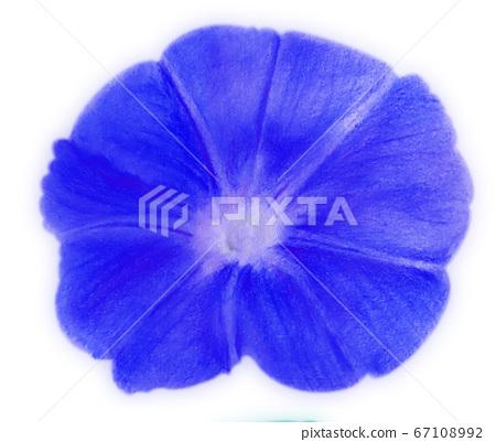 Morning glory 01 front dark blue 67108992