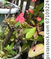 Hanakilin將花朵貼在像長頸鹿一樣苗條的身上 67109224
