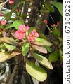 Hanakilin將花朵貼在像長頸鹿一樣苗條的身上 67109225