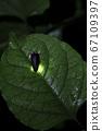 [여름 이미지] 반딧불의 빛 67109397