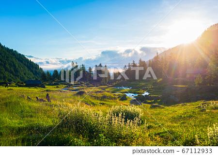 Alpine landscape, mountain stream in idyllic 67112933