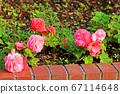 粉色的花开在花坛里 67114648