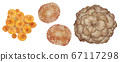 Set of shiitake mushrooms and maitake mushrooms seen from above 67117298