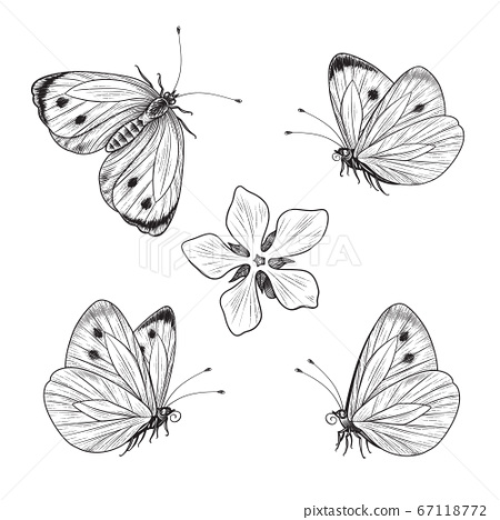 Hand drawn Flying and Sitting Butterflies Set 67118772
