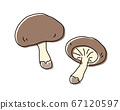 Handwritten mushroom illustration / Autumn taste / Matsutake mushroom / Shiitake mushroom 67120597