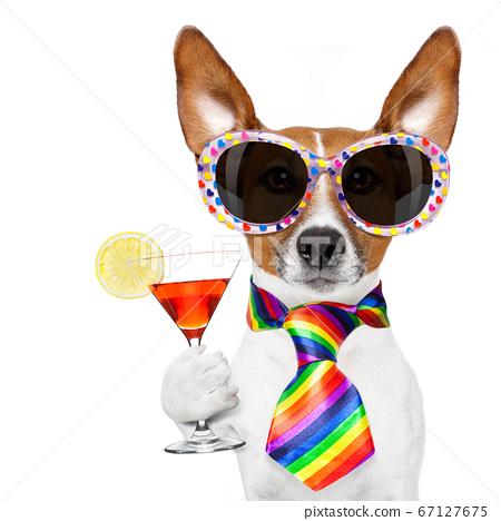 gay pride dog with rainbow 67127675