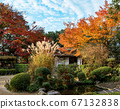 Shishido - autumn leaves 67132838