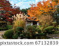 Shishido - autumn leaves 67132839