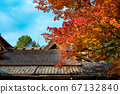 Shishido - autumn leaves 67132840