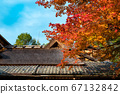 Shishido - autumn leaves 67132842