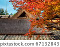 Shishido - autumn leaves 67132843