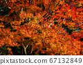 Autumn leaves 67132849