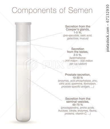 Components of semen infographic. Secretions from testes, prostate, seminal vesicles and cowpers glands in a test tube. Chart with elements of sperm, like enzymes, spermine, proteins, spermatozoa. 67132930