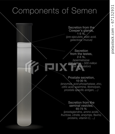 Semen in a test tube. Components of sperm chart. Secretions from testes, prostate, seminal vesicles and cowpers glands with elements like enzymes, spermine, proteins, spermatozoa. 67132931
