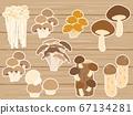 Mushroom 3 mushroom shiitake nametake mushroom matsutake 67134281