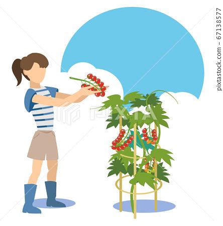 廚房花園女人收穫小西紅柿 67138577