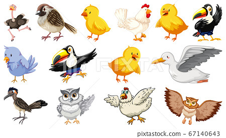 Set of different birds cartoon style isolated on 67140643