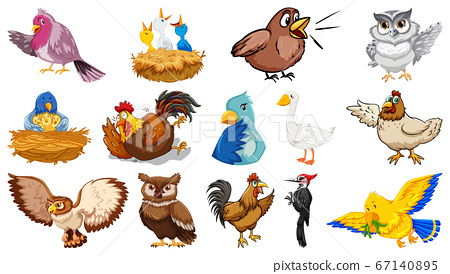Set of different birds cartoon style isolated on 67140895
