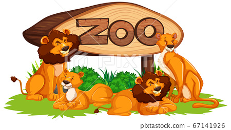 Lion with zoo sign isolated 67141926