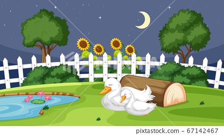Cute duck sleeping on grass 67142467