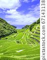 Rice terraces in Hamanoura with beautiful summer greens (Genkai Town, Saga Prefecture) 67143138