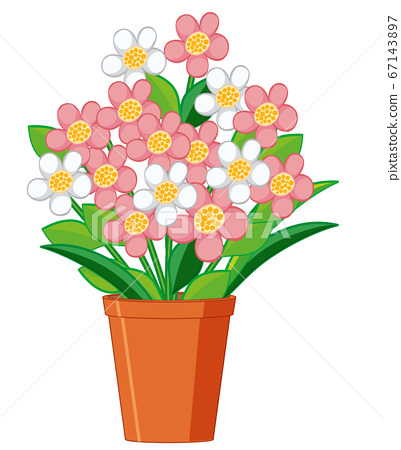 Beautiful flowers in clay pot on white background 67143897