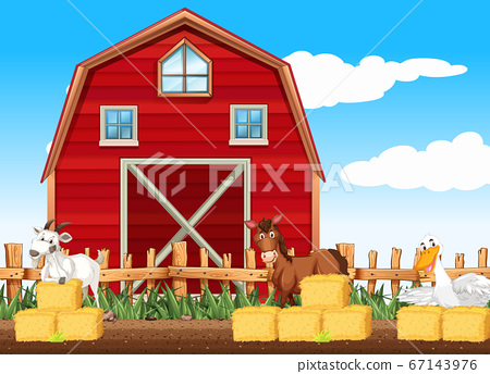 Farm scene with many animals by the barn 67143976