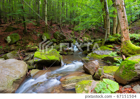 water stream among the rocks in the forest. summer 67151504
