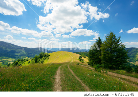path through the meadow in mountains. sunny summer 67151549