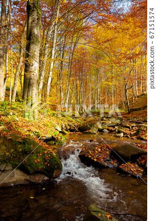 river on the autumn sunny day. wonderful 67151574