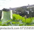 在千叶公园的Ogajas的芽 67155658