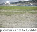 検見川 바닷가 둥지에서 포란중인 코아지사시 67155668