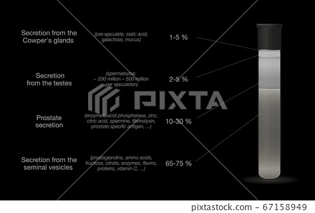 Sperm sample in a test tube. Components of semen. Medical chart with percentage of secretions from testes, prostate, seminal vesicles and cowpers glands. Vector on black. 67158949