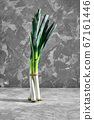 Green onions or shallots on a grey concrete background with a copy of the space. 67161446